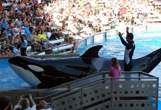 PETA suing Seaworld for enslaving orcas